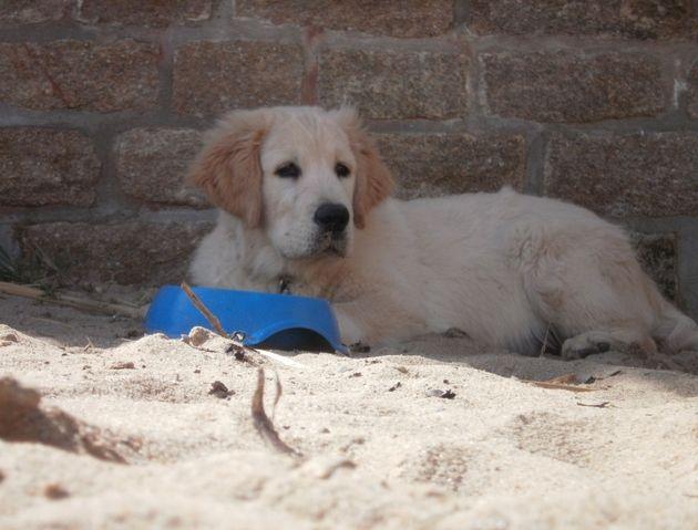 Photo de Ganja, chien de Wamiz