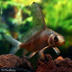 Aquariumfish Net Aquarium Fish Pet Fish Fish
