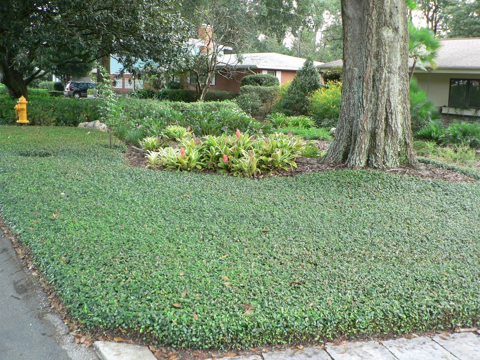 for Landscaping ground cover plants