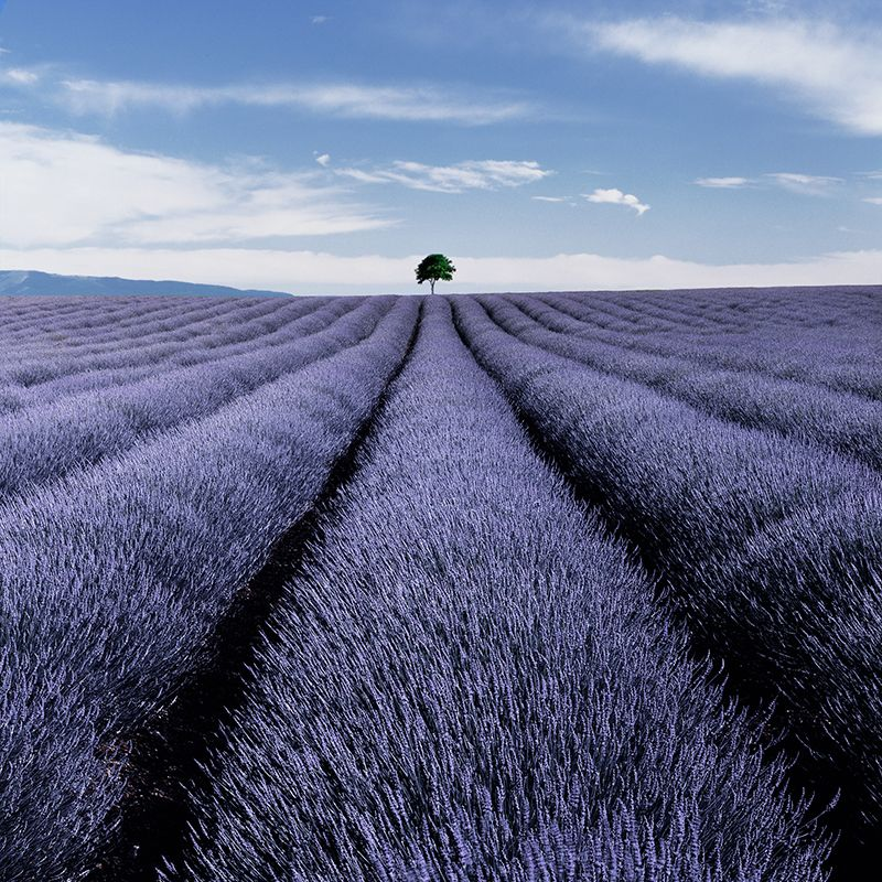 What Are The Characteristics Of Landscape Photography Wide Good Composition Colour Filters De Lavender Fields Landscape Photography Line Photography