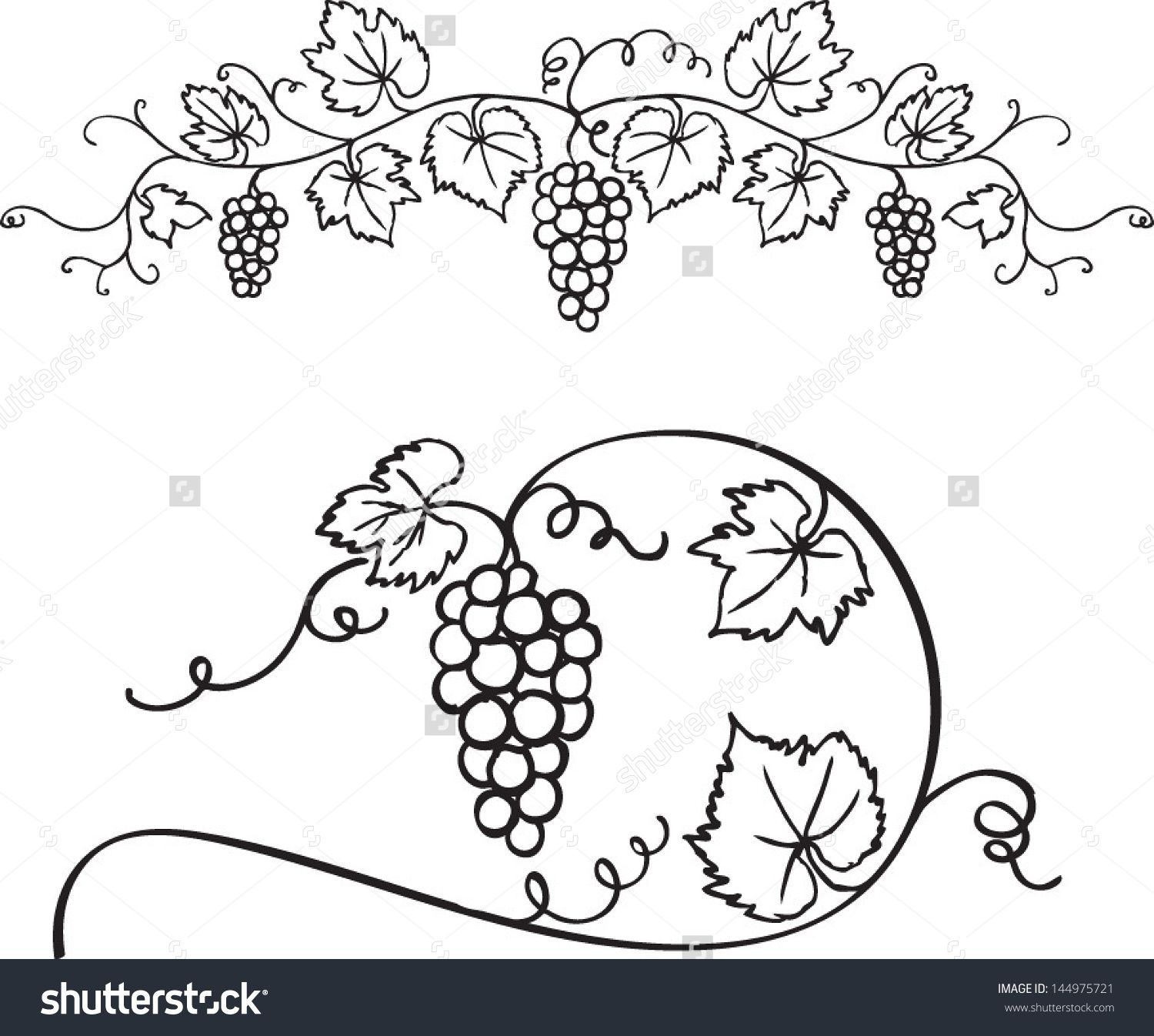 Decorative grapes  for Drawing Grape Vines  75sfw