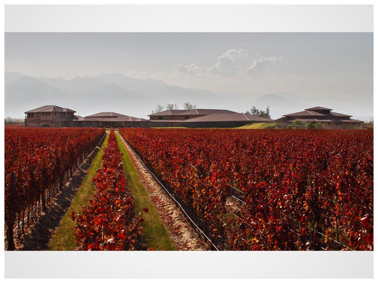 Finca Decero Mendoza Wine Vineyards Vineyard Winery