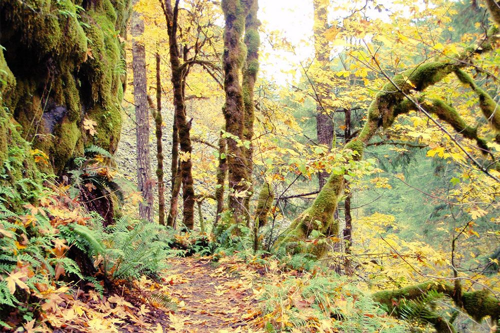 Pin By Corbin Chapman On Travel Camping And Hiking Washington Hikes Outdoors Adventure
