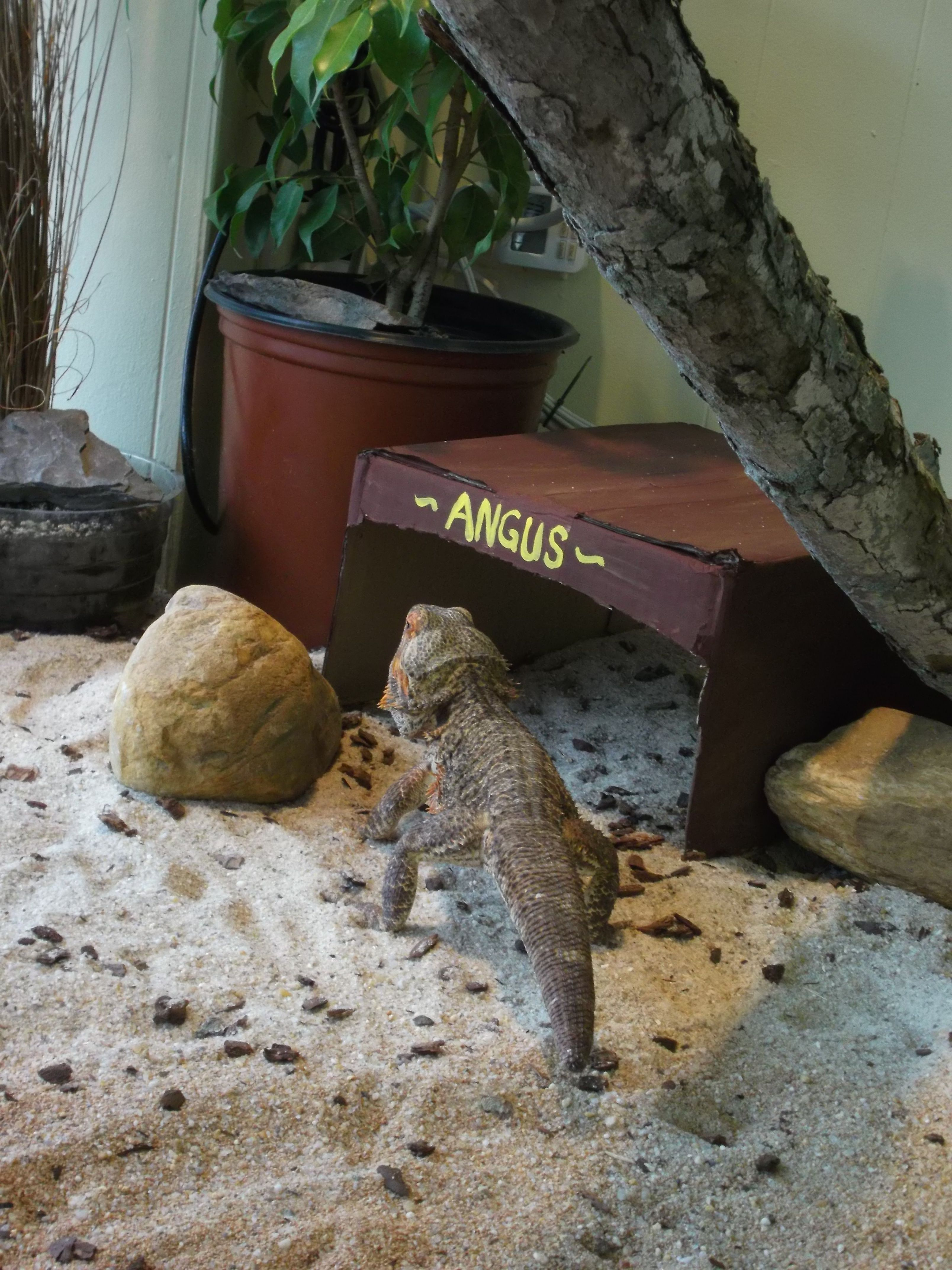 Angus checking out his house