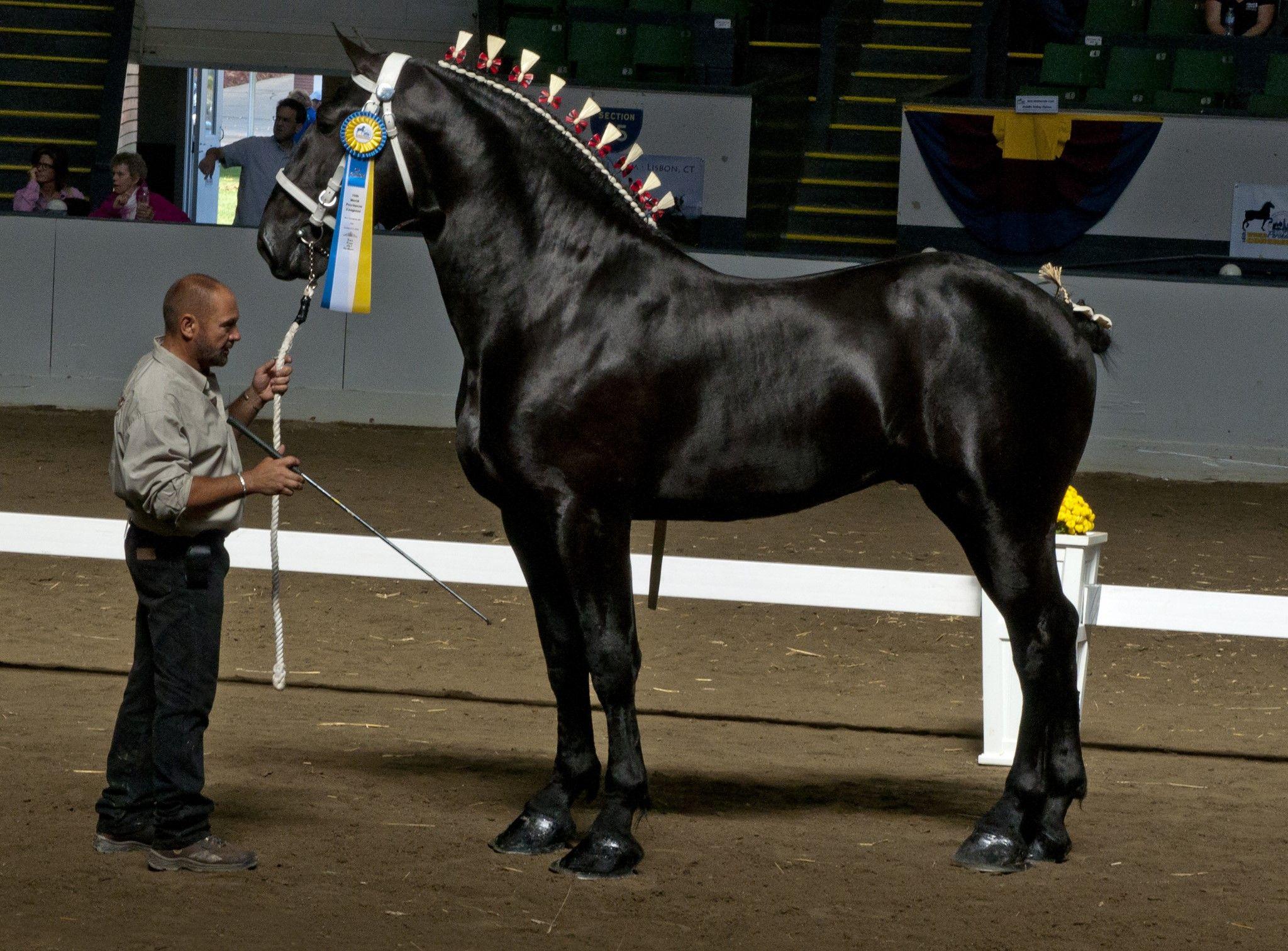 4f3071f6a184c6c27f67a169b811a469 image result for heavy harness horses horses pinterest horse