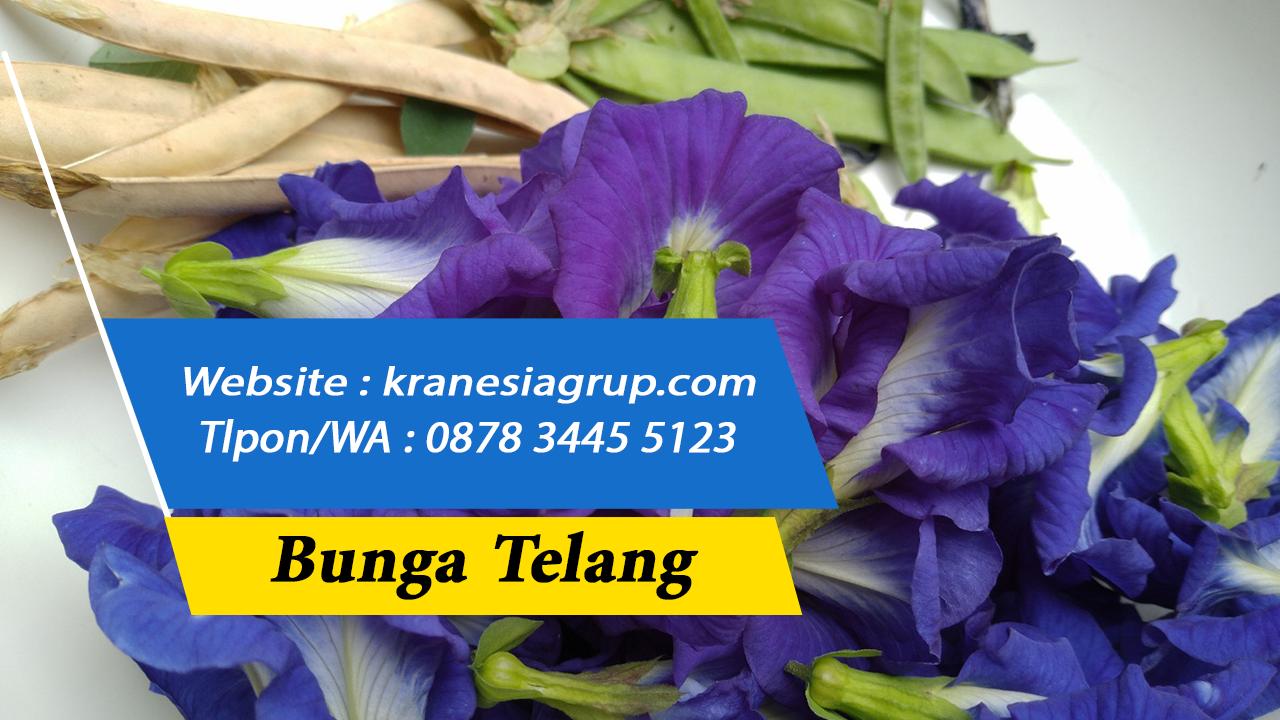 0878 3445 5123 Harga Bunga Telang Kering Malaysia Bunga Telang Harga Malaysia Bunga Kuala Lumpur