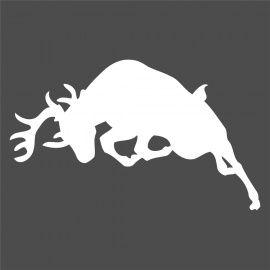 charging deer | Image, Deer, Google images