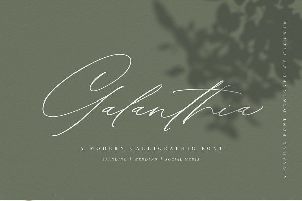 Search Creative Market (With images) Elegant script