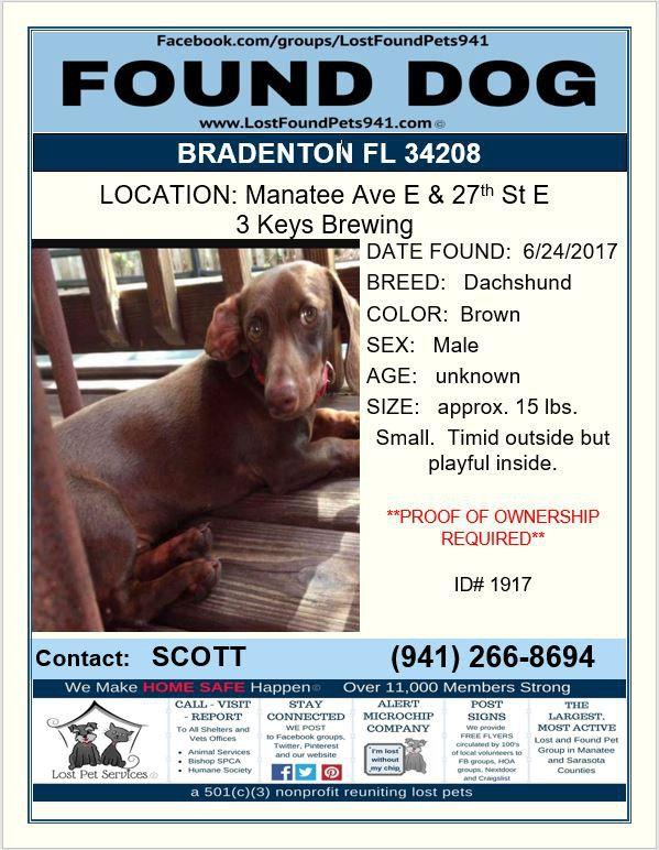 Do You Know Me Lost Dog Pet Founddog Dachshund Bradenton Fl 34208 3keysbrewing Lostfoundpets941 Losing A Pet Dogs Dachshund Dog