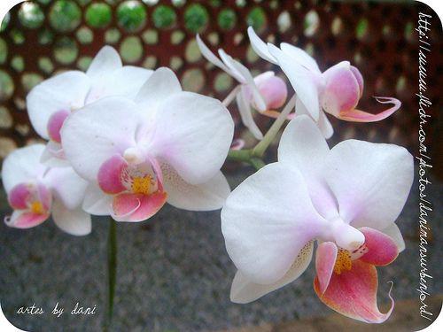 Feliz Quinta Flower, Feliz Dia do Fisioterapeuta!