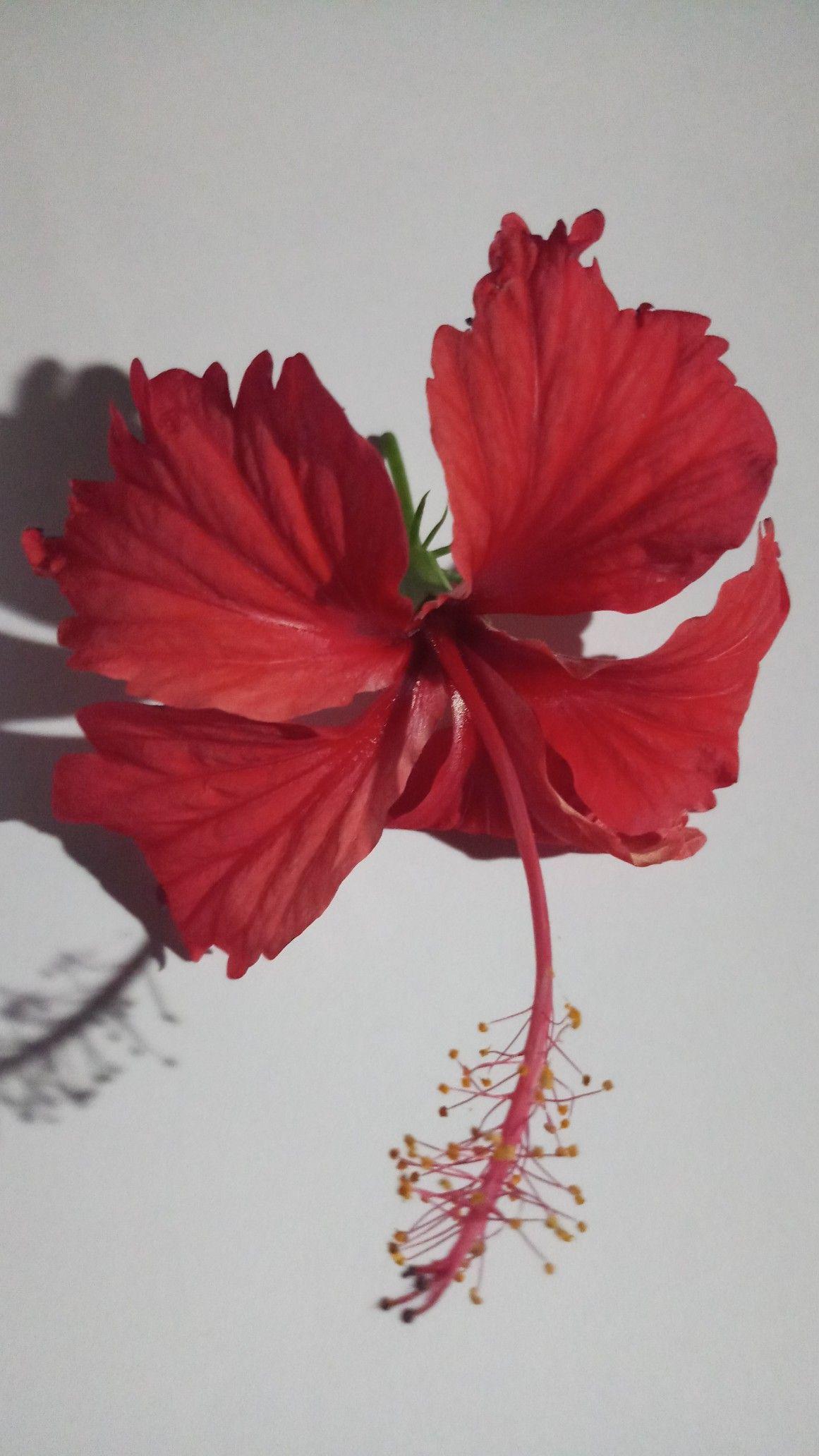 Pin By Bablu Mandal On 11 In 2020 Maple Leaf Tattoo Leaf