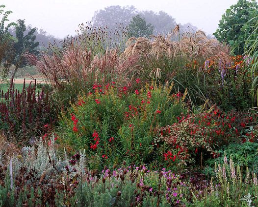 Glorious Autumn Garden With Tall Grasses Landscaping Plants