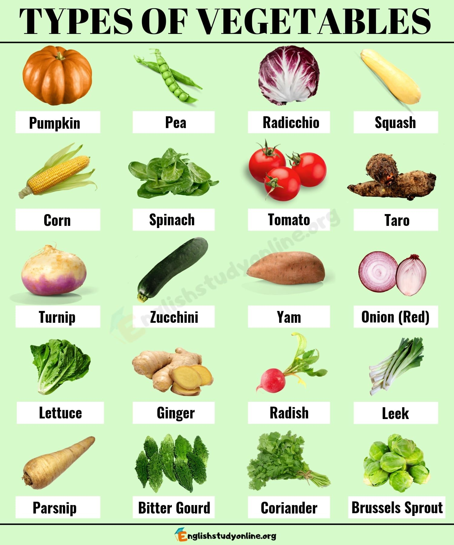 Types Of Vegetables Learn 40 Most Popular Vegetable Names With