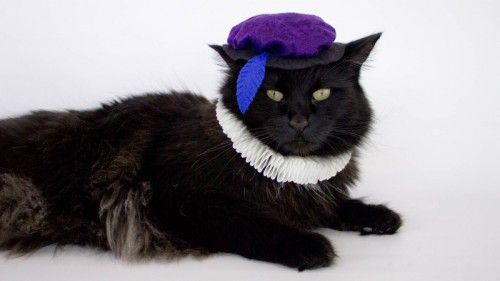 Image result for renaissance cat costumes