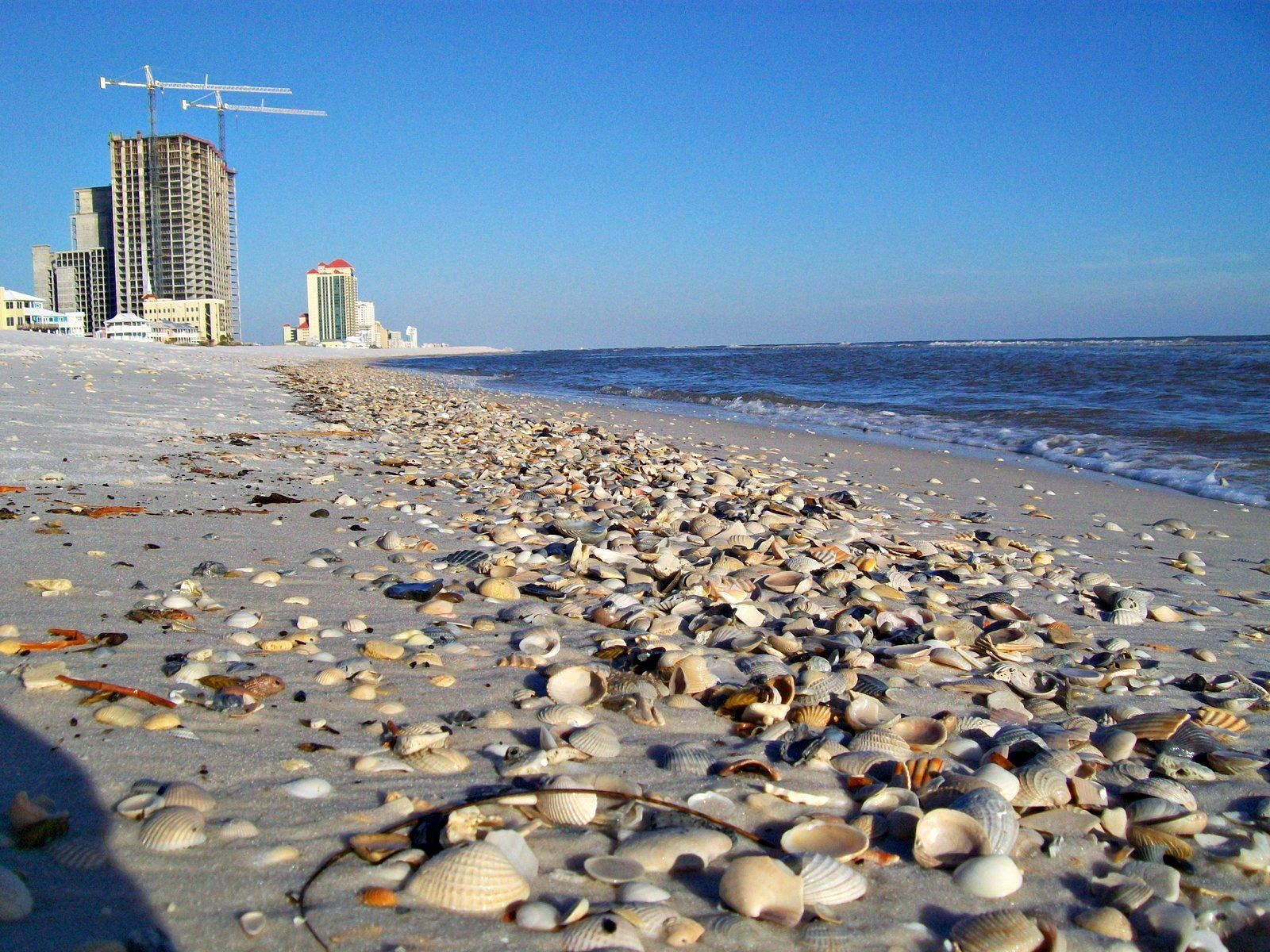This Was A Great Day For Shelling Gulf Shores Orange