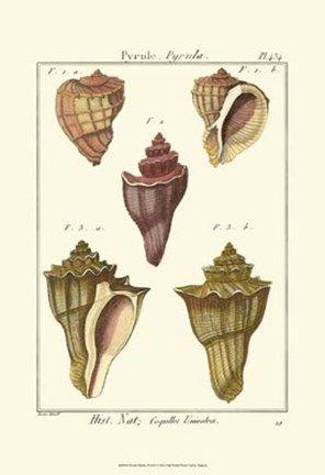 Framed Pyrule Shells, Pl. 434 Print