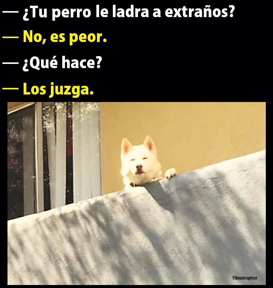 Pin De Nil Walcacer En Gracioso Memes De Animales Divertidos Memes Divertidos Memes Perros