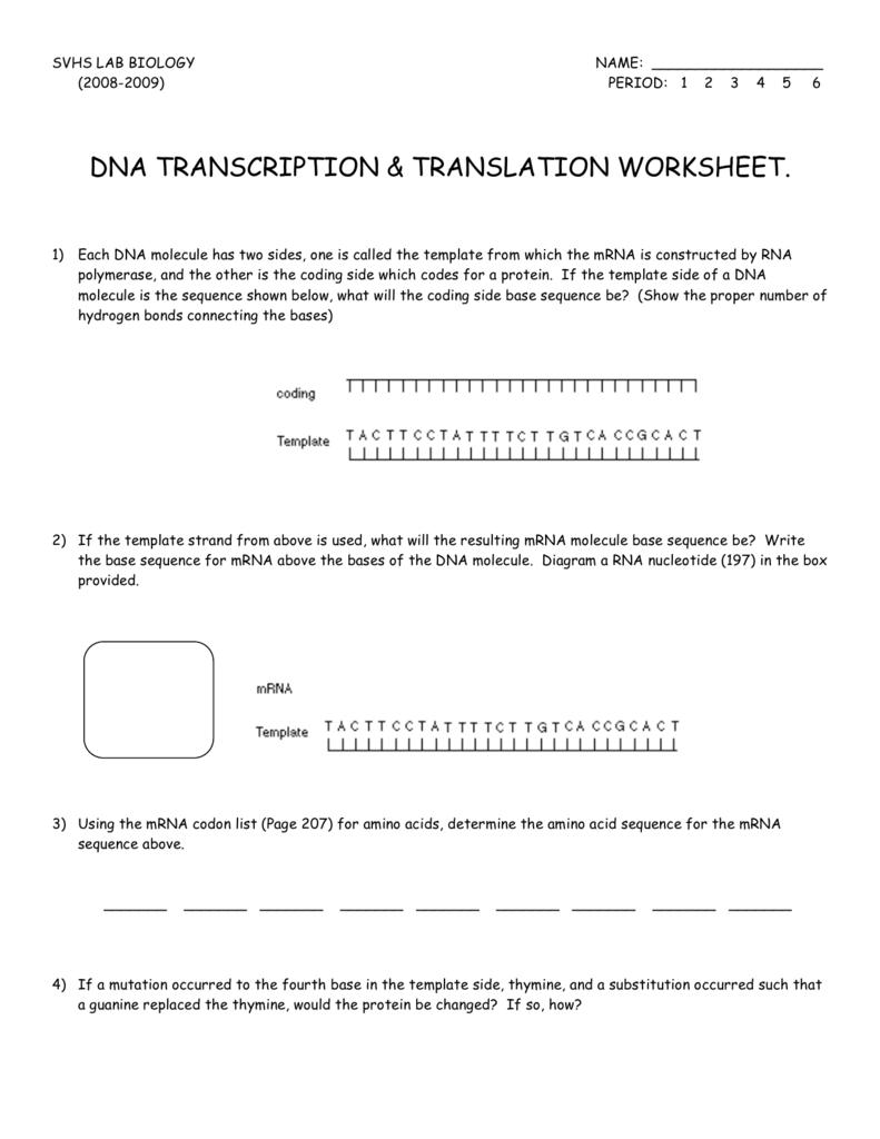Dna Translation Worksheets