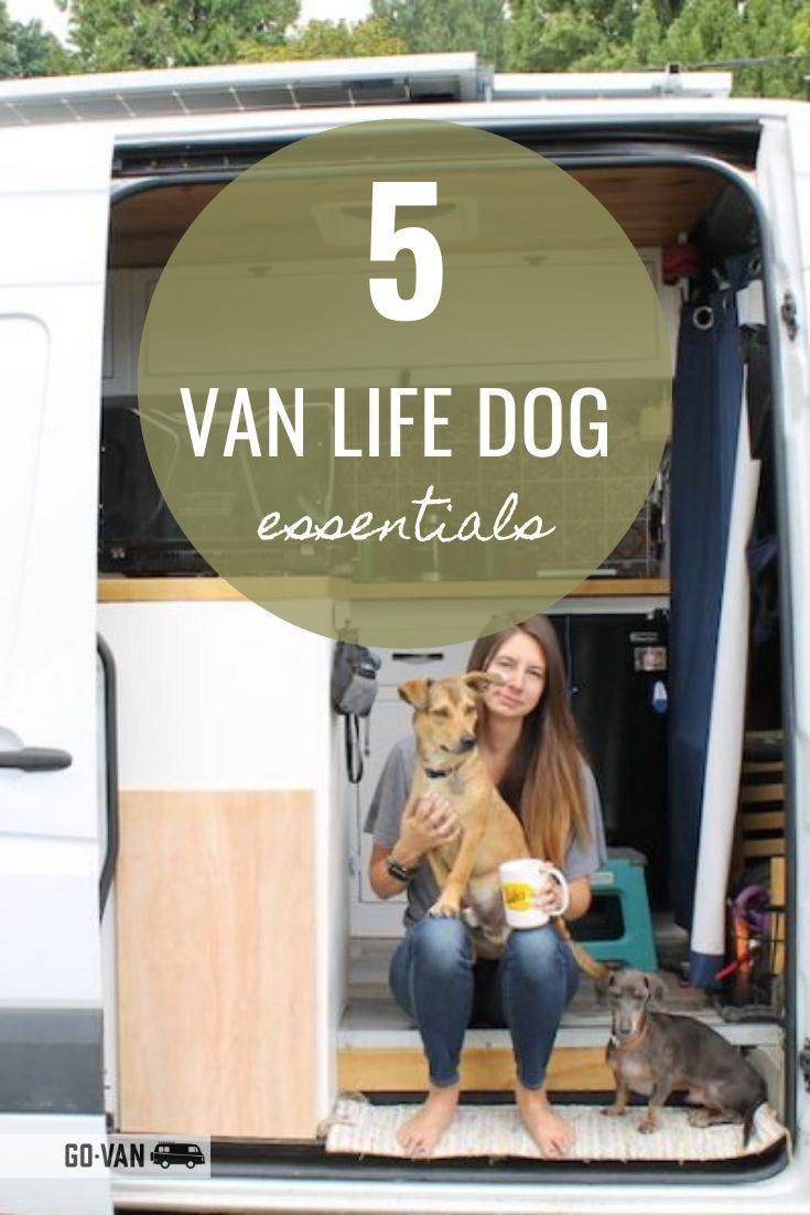 Photo of 5 van life dog essentials