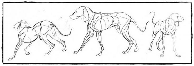 25 belos desenhos de animais para a sua inspiração 26