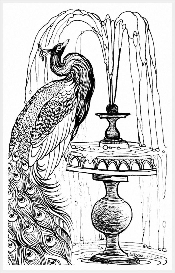 рисунок | Павлин, Раскраски с животными, Рисунки