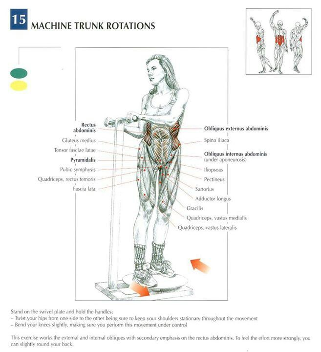 Ab Excersise - Machine Trunk Rotations ~ Re-Pinned by Crossed Irons Fitness