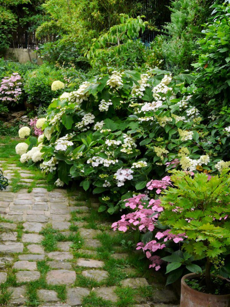 Jardin de curé  15 plantes qui le composent – Luxury garden
