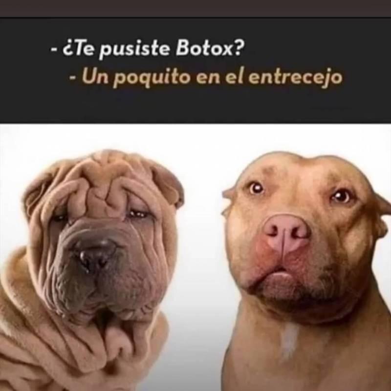 Memesespanol Chistes Humor Memes Risas Videos Dbz Memesespana Espana Humor Divertido Sobre Animales Cachorros Divertidos Videos Divertidos De Animales
