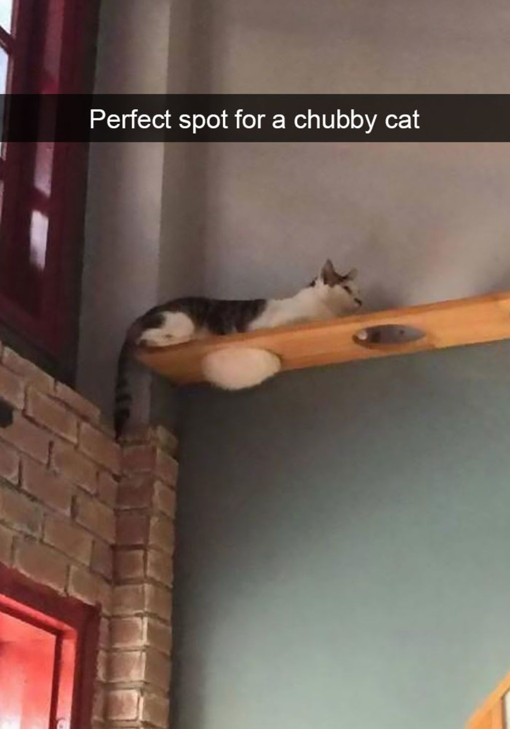 Hilarious Cat Snapchats That Need To Be Treasured Forever - 26 hilarious cat snapchats that need to be treasured forever