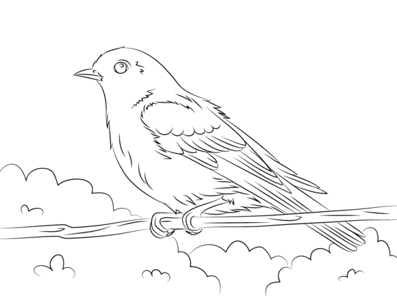 Eastern Bluebird Coloring page | Free!! :) | Pinterest