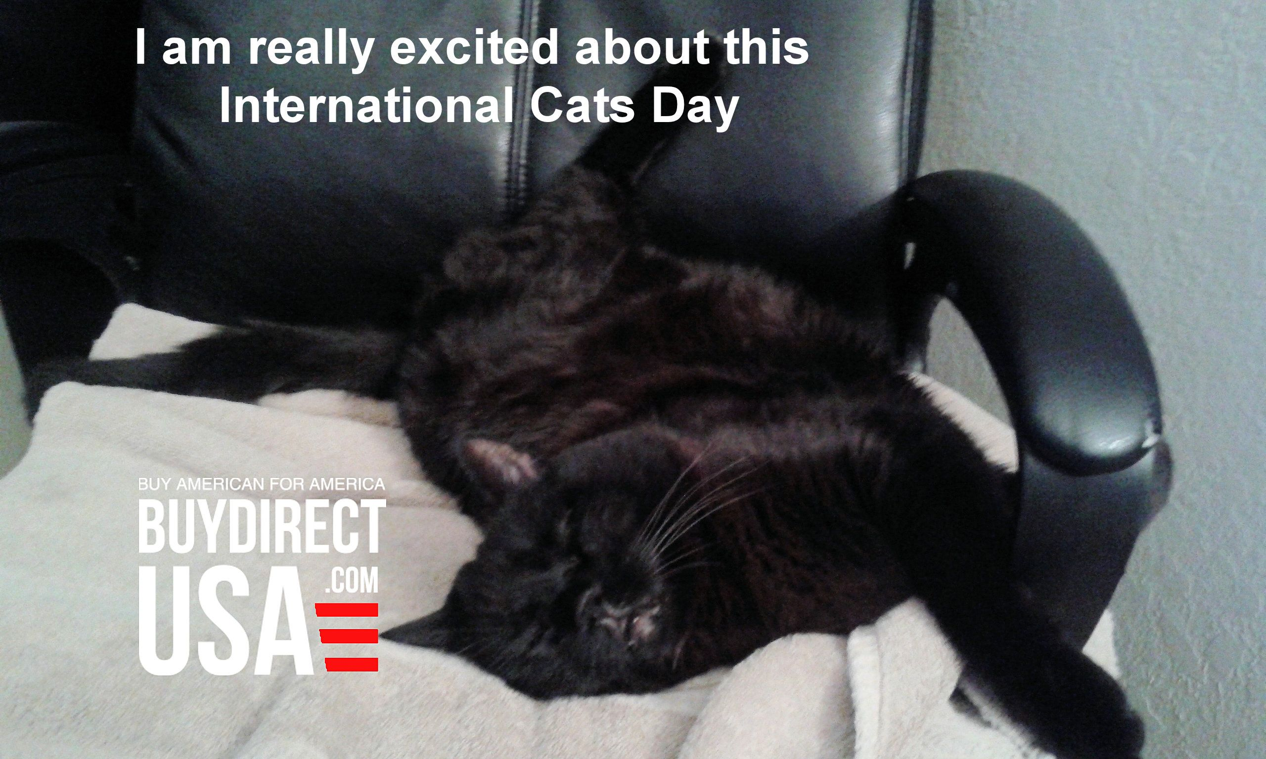 Ninja Is So Excited About National Cats Day He Just Can T Hold It In Actually He Is Snoring In The Chair Ne National Cat Day International Cat Day Instagram