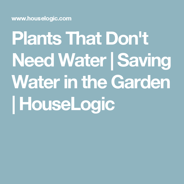 5 Plants You Almost Never Have to Water Plants and Gardens