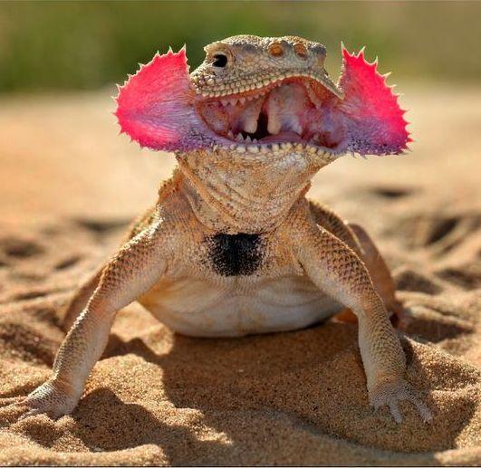 Reptile dating site