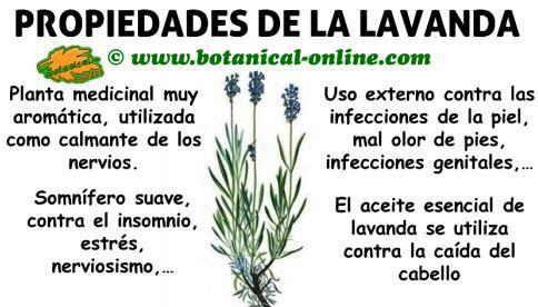 propiedades medicinales y beneficios de la lavanda planta para los