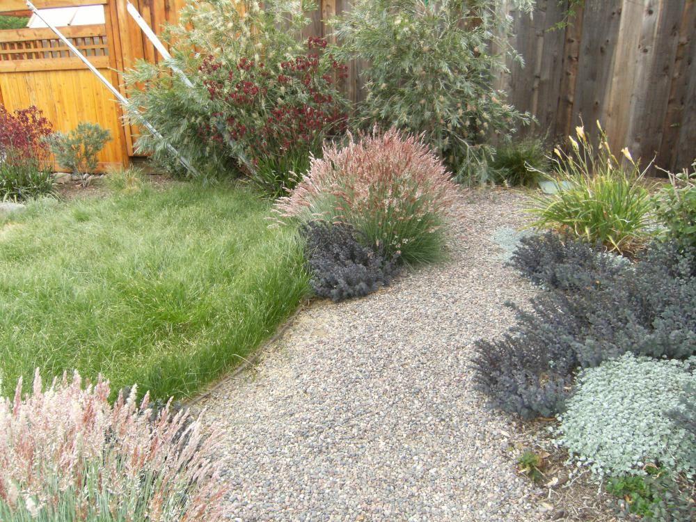 New Ideas For Lawn Part 2 Carex Pansa Carex Texensis
