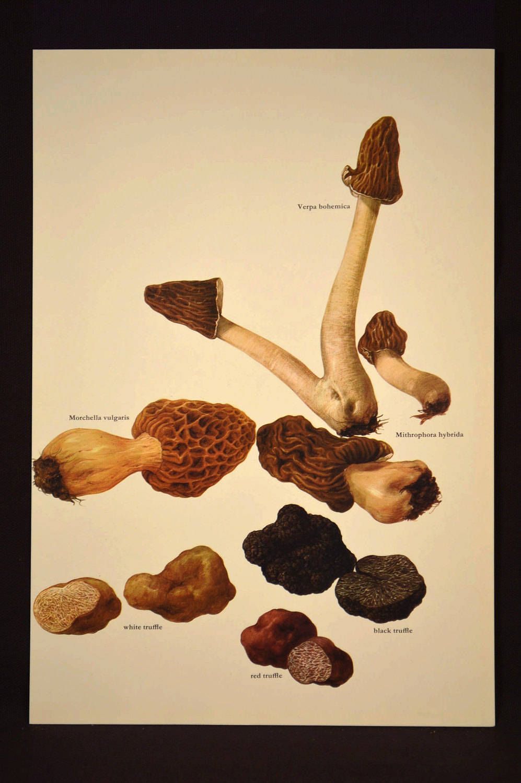 Morel Mushroom Print Kitchen Wall Decor Art Truffles Vegetable ...
