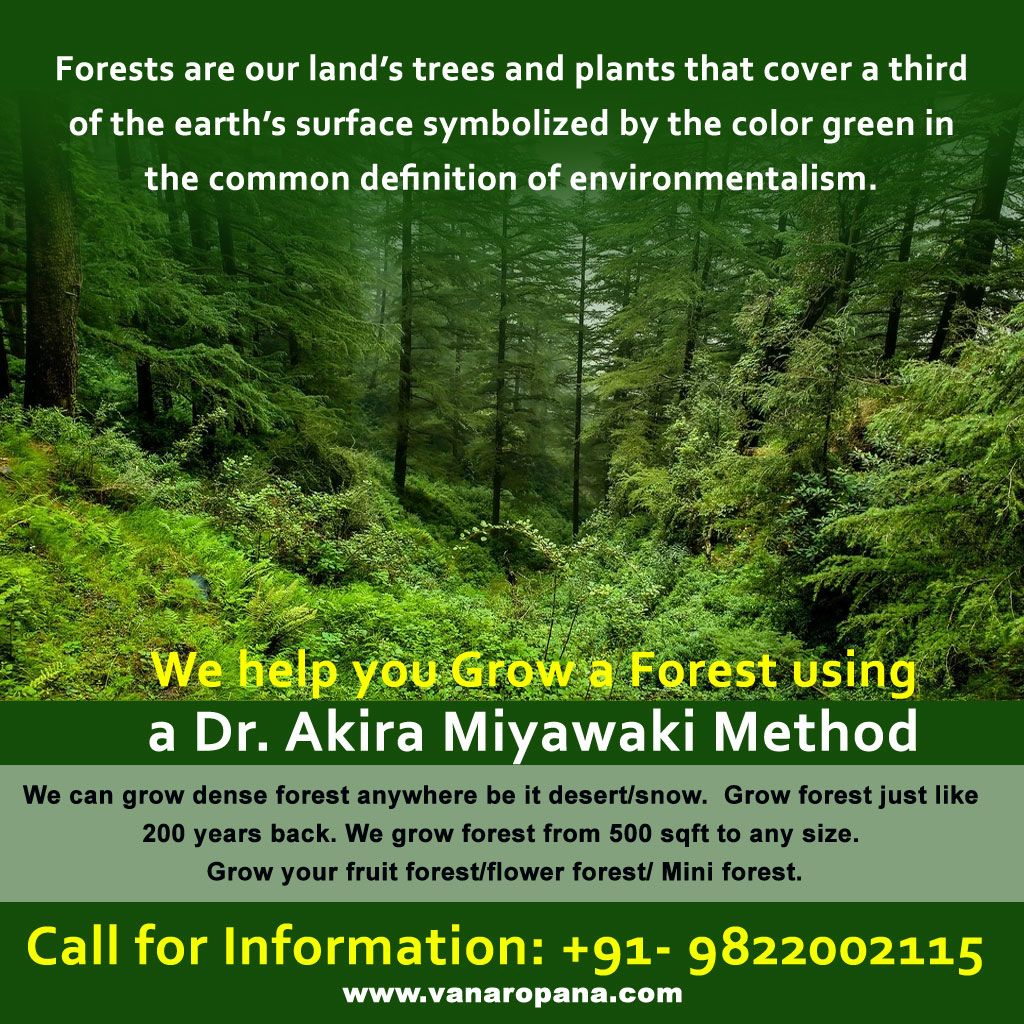 Forest, Pretty Gardens, Earth Surface