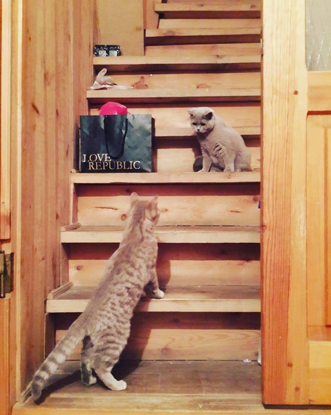 Встреча #cat #cats #двакота #котырубцовска #кот