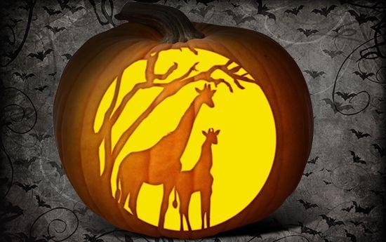 Pumpkin Carving Fun Animal Designs And Templates Giraffes