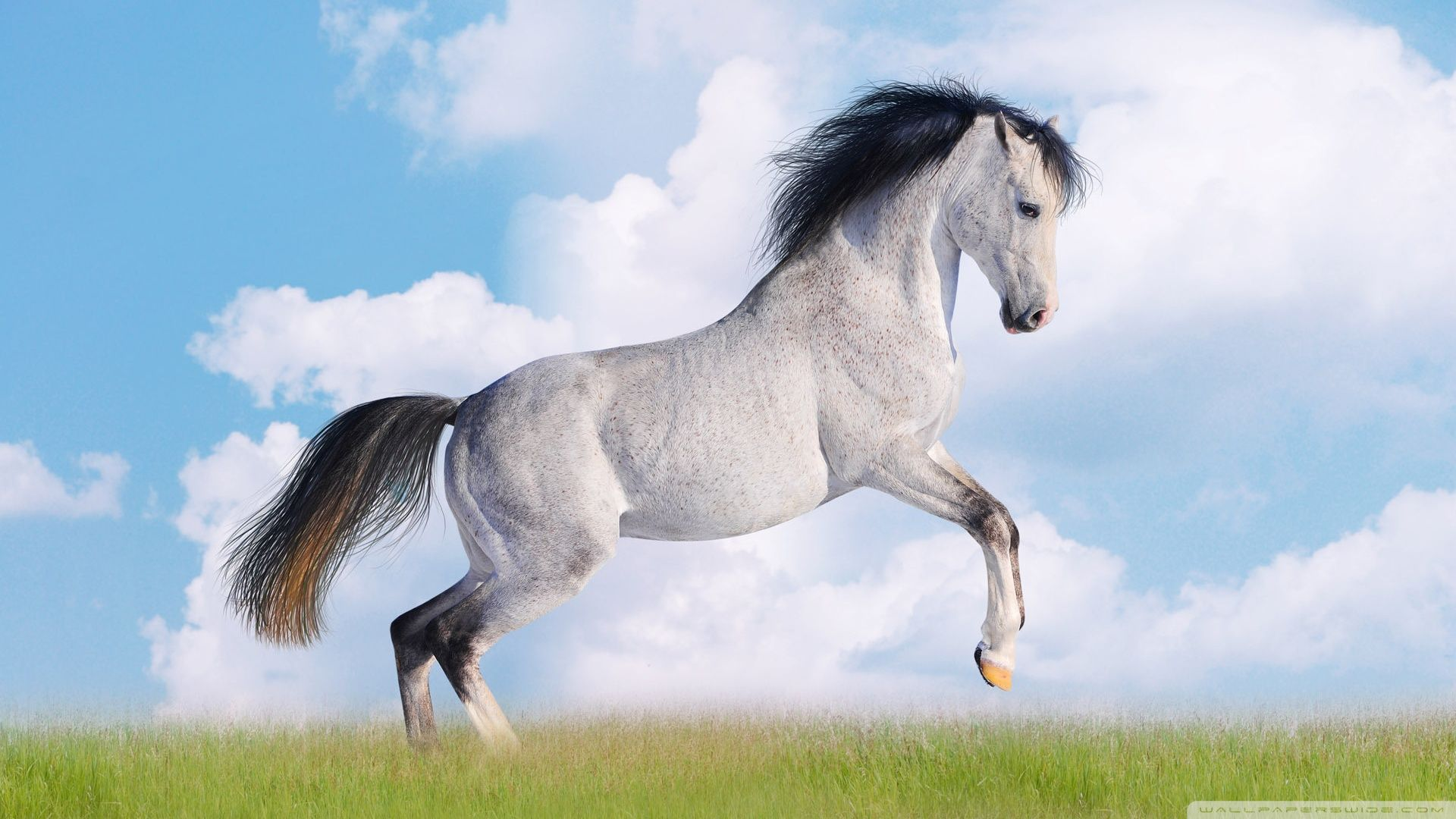 Download Wallpaper Horse High Definition - 4f3bc3fe8e24ccbdf8ab3caa5301f689  Image_223488.jpg