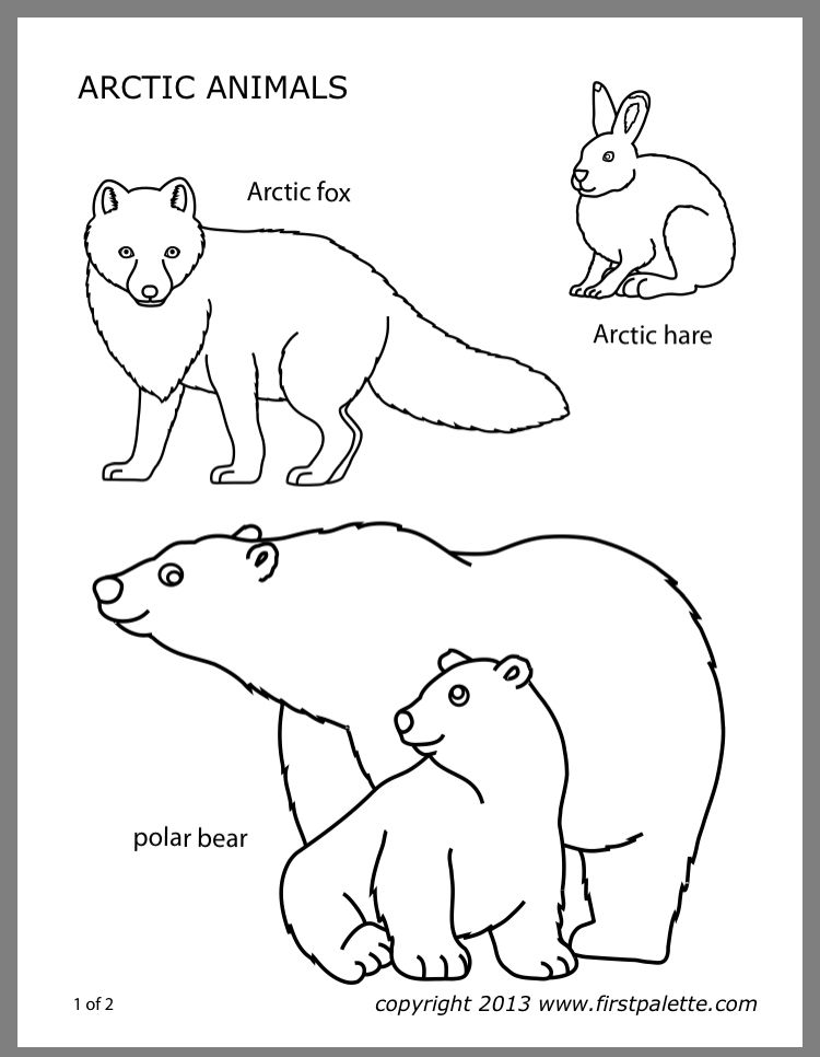 Pin By Alex Ramirez On Science Polar Animals Artic Animals