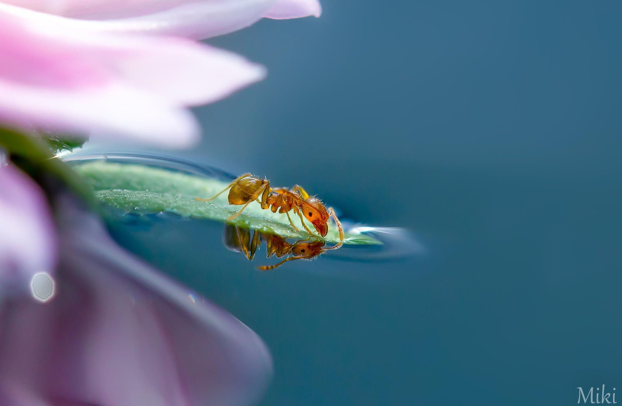 Photograph But I can't swim by Miki Asai on 500px