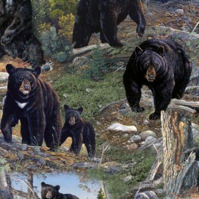 Black Bears Scenic Outdoors