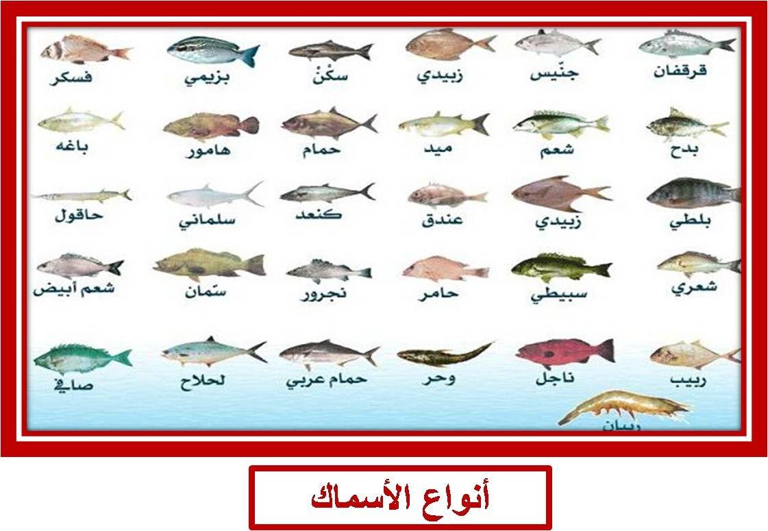 Types Of Fish Art Fish