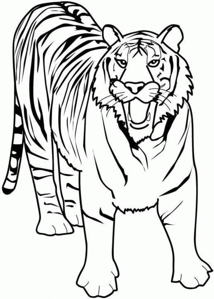 A Roaring Tiger Coloring Page To Print For Free | Animal Coloring ...