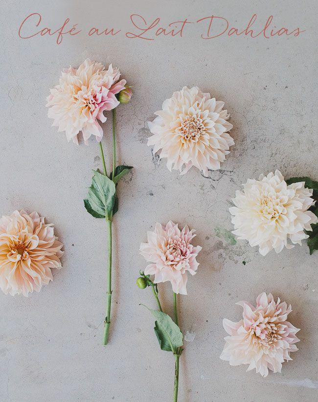 Seasonal Flower Guide: Summer   Dahlia, Cafes and Flowers