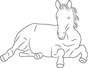 ausmalbild pony im zoo in 2020 | ausmalbilder pony, ausmalen, ausmalbilder tiere