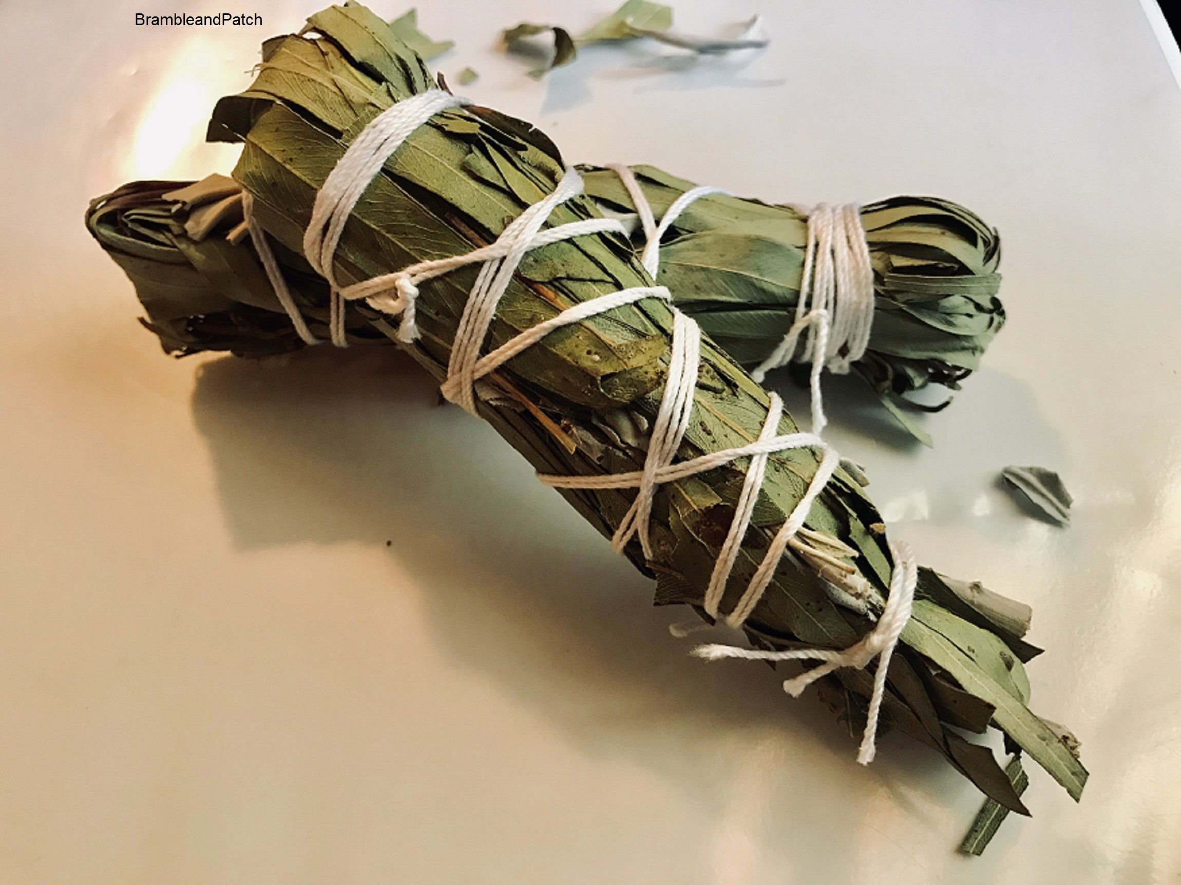 Eucalyptus And White Sage Smudge Stickapprox 5 Inches Etsy White Sage Smudge Dream Herbs Smudge Sticks