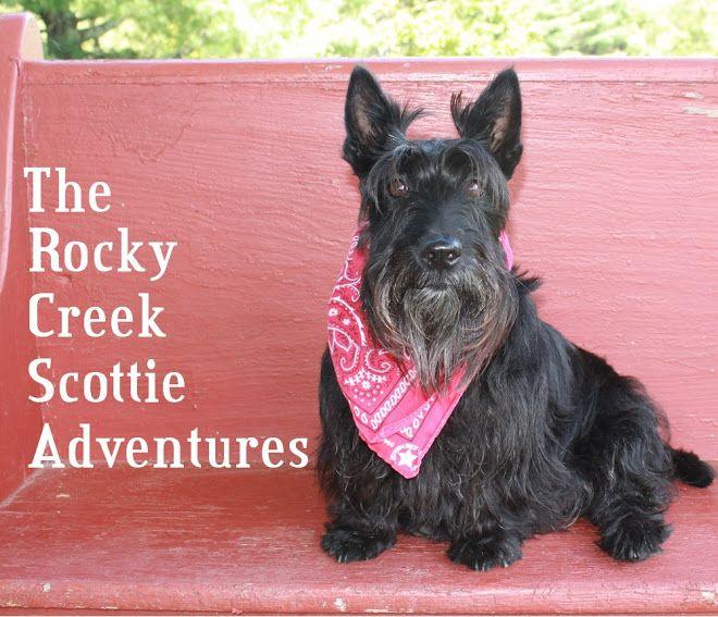 Rocky Creek Scottie Adventures Rocky Creek Scottie Scottie Dog