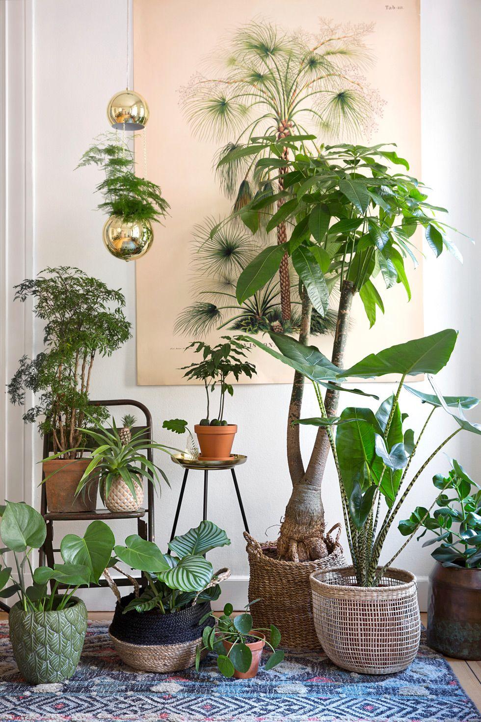 stora växter inne